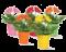 rastliny, semená